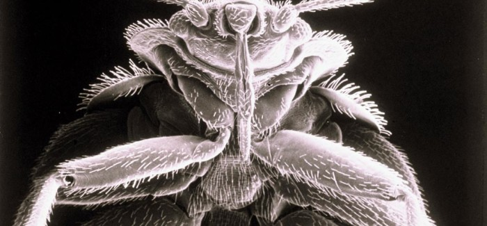 Un King Size sans bedbugs, merci !