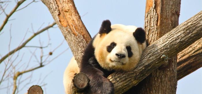 10 bonnes raisons d'aller au zoo de Beauval