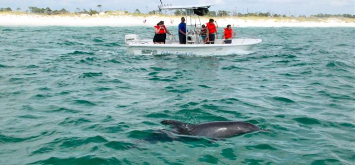 On a nagé avec les dauphins à Panama City