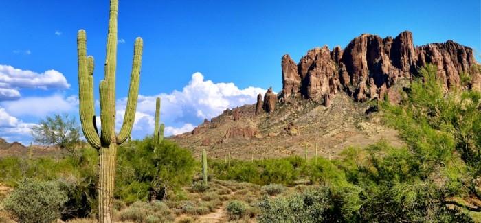 Lost Dutchman State Park, pour quelques saguaros de plus
