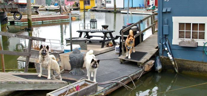 Sausalito, «sittin'on the dock of the bay»