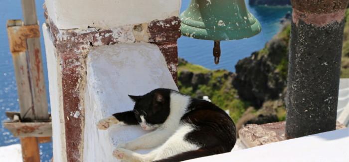 Les chats, des dieux grecs sur l'île de Santorin