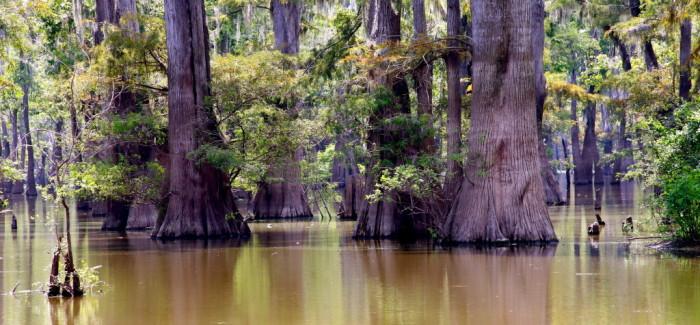 Saint Catherine Creek, un refuge pour 247 espèces d'oiseaux, des alligators et deux roadtrippers