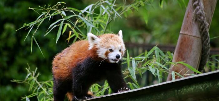 Zoo de Vincennes vs Jardin des plantes : le test