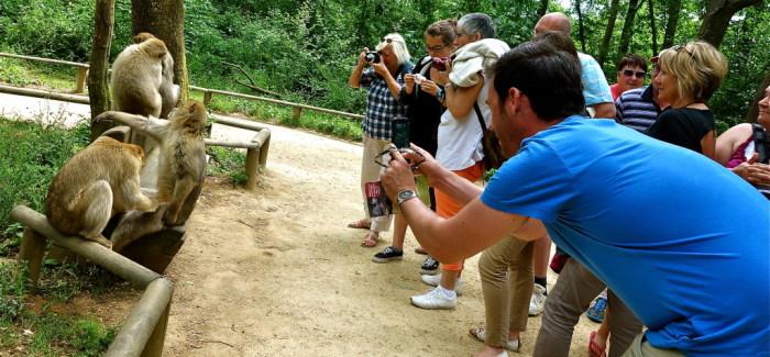 La Vallée des singes, une journée chez les cousins viennois