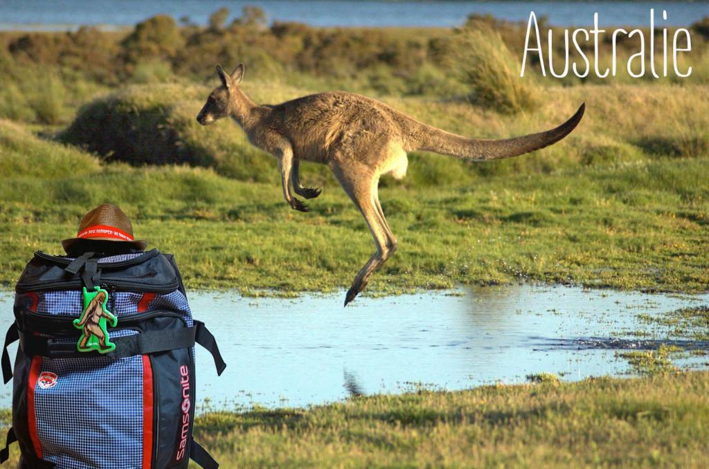 Flying-kangaroo copie